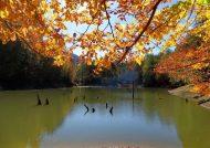 دریاچه چورت و نمایی از آن