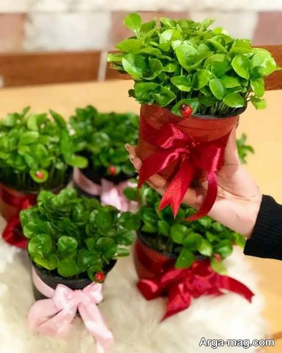 ایده تزیین سبزه عروس