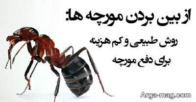 چند روش خانگی برای نابود کردن مورچه ها
