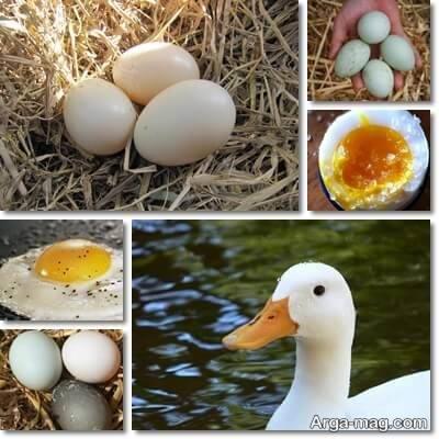 خواص تخم ادرک و فواید ان برای بدن