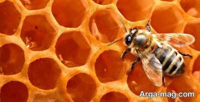 تعبیر دیدن عسل در خواب