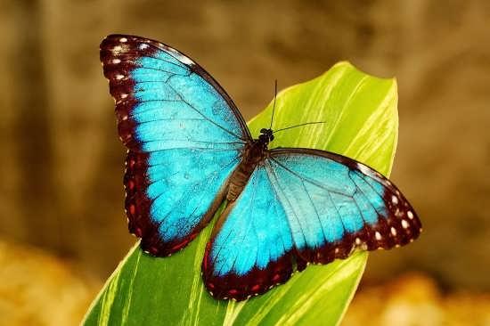 تصاویر زیبای پروانه