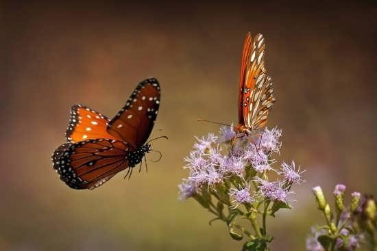 تصاویر فوق العاده زیبای پروانه