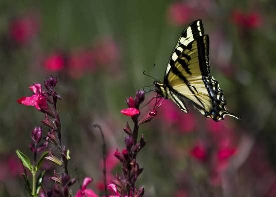 تصاویر متفاوت پروانه