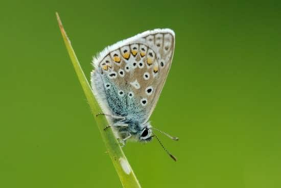 انواع تصویر پروانه ها