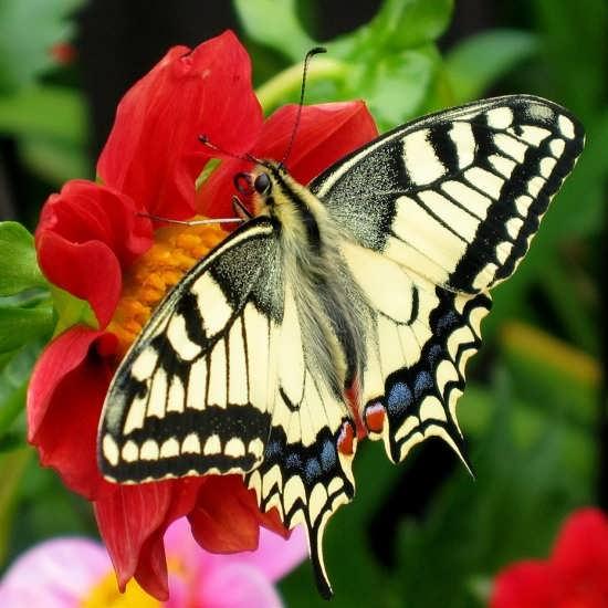 تصاویر پروانه های زیبا