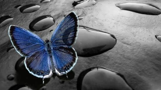 تصاویر پروانه برای پروفایل