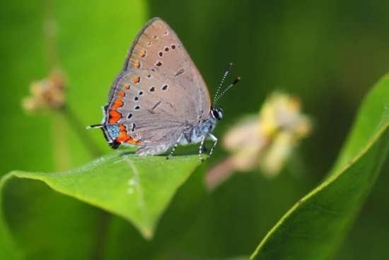 تصاویر پروانه در طبیعت