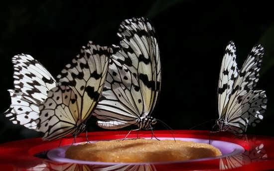 زیباترین تصاویر پروانه