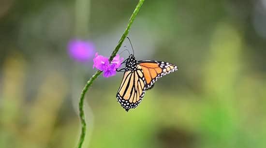 متفاوت ترین تصاویر پروانه