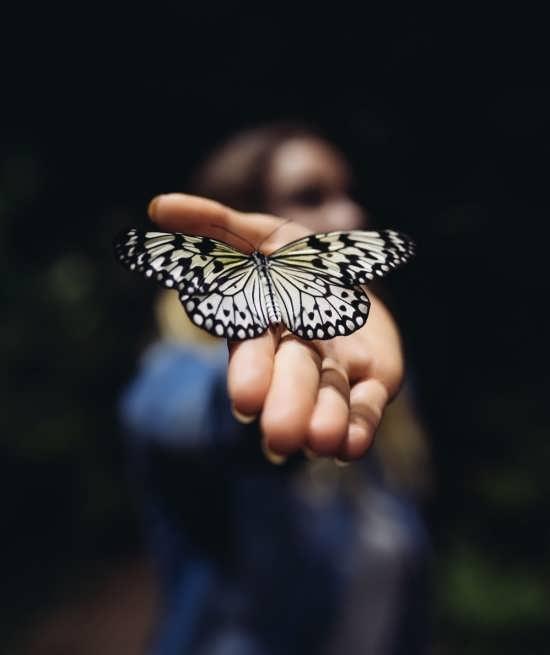 مجموعه تصاویر پروانه