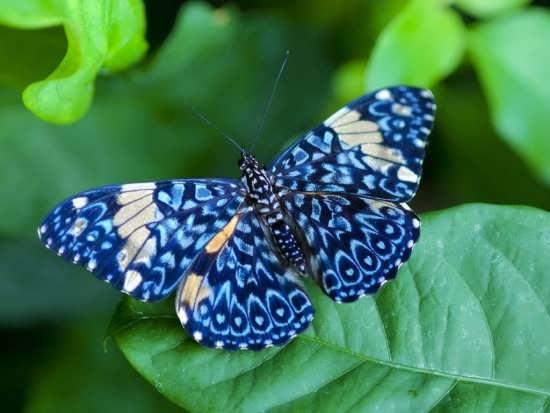 انواع تصاویر پروانه