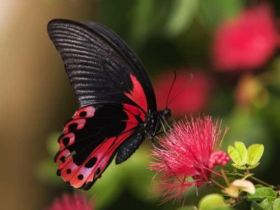 جذاب ترین عکس پروفایل پروانه