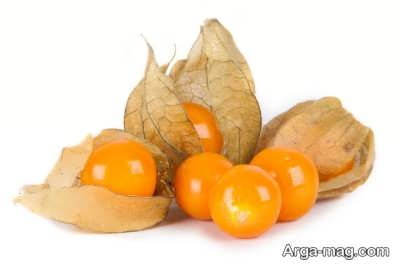 خواص میوه فیسالیس