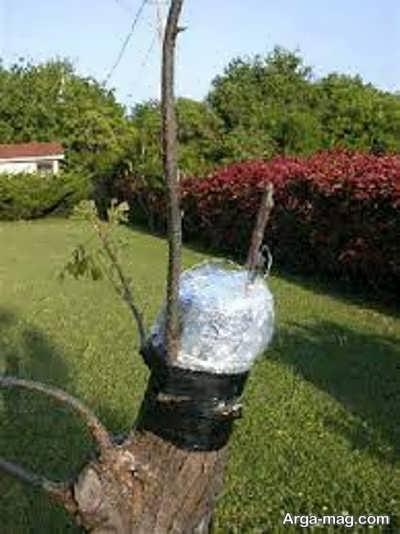 پرورش درخت انار