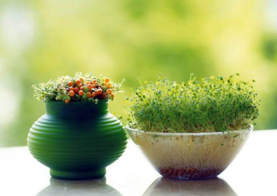 کاشت سبزه فوری و آسان