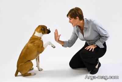 تربیت سگ های نگهبان