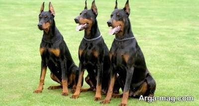 اصول تربیتی سگ نگهبان