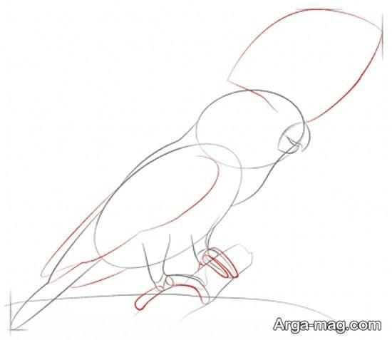 ایده نقاشی طوطی