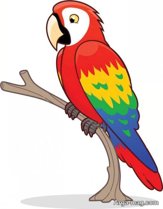 آموزش طوطی رنگی