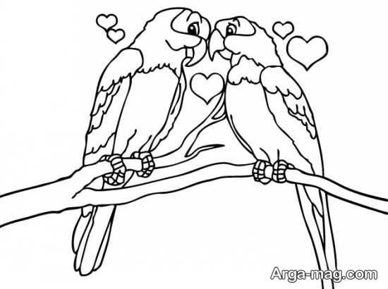 نقاشی و طراحی طوطی