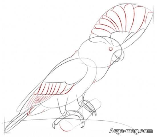 نقاشی طوطی به روش ساده