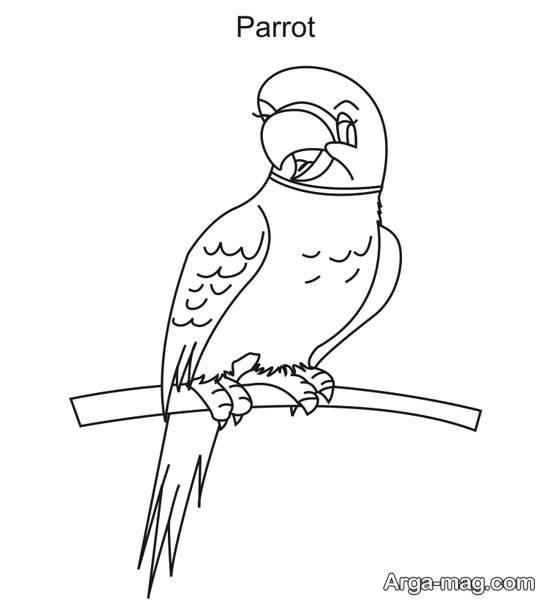 نقاشی ساده طوطی
