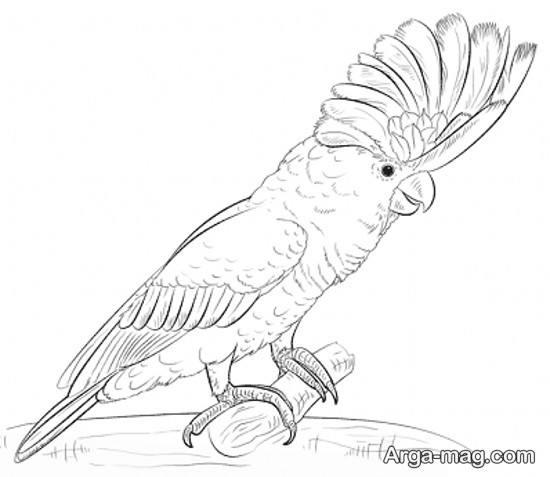نقاشی های طوطی