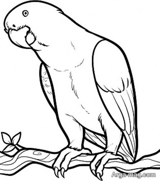 نقاشی قشنگ طوطی