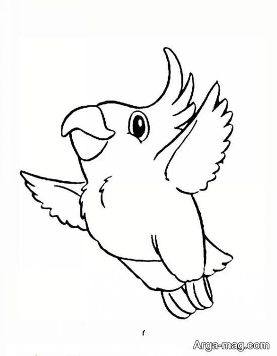 طراحی از طوطی