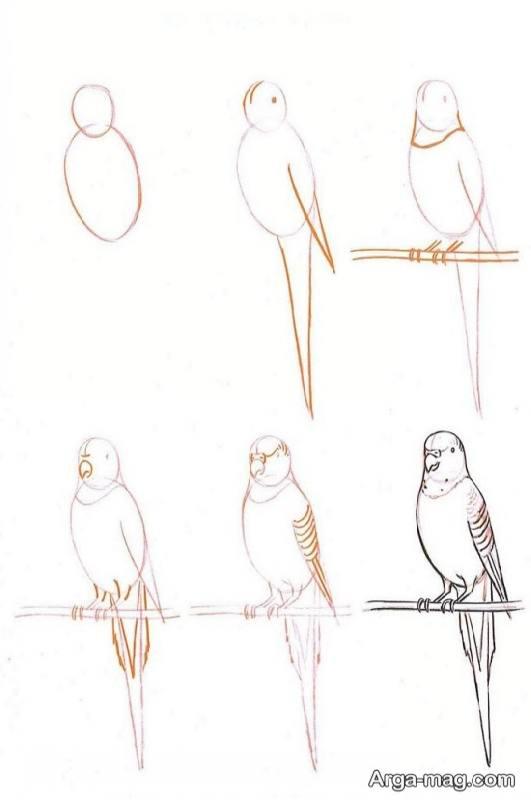 مراحل کشیدن طوطی