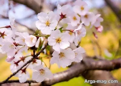 متن برای فصل بهار