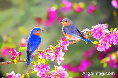 جمله های جالب و زیبا در مورد بهار