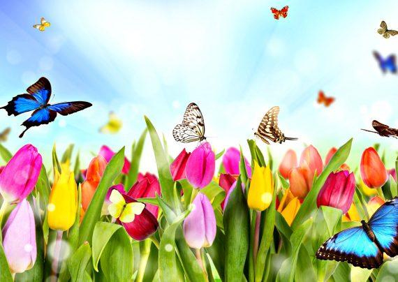 جملات زیبا درباره بهار