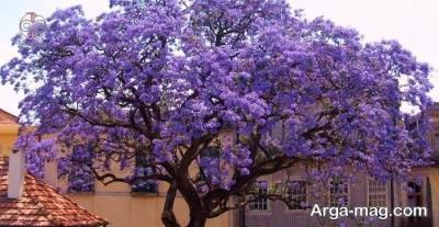 درخت بی نظیر پالونیا