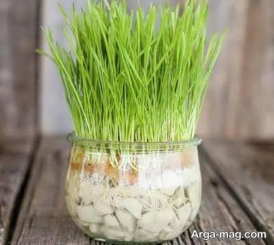 کاشتن سبزه درون آب