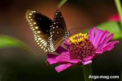 مراحل رشد پروانه