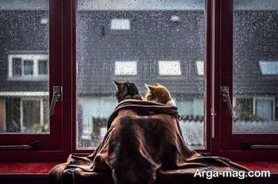 جملات عاشقانه ترکی