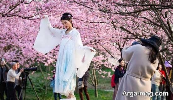 جشن شکوفه های گیلاس