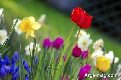 متن زیبا و ناب در مورد بهار