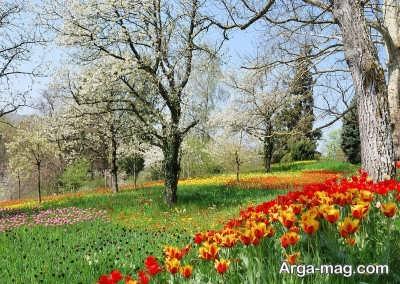 جمله های کوتاه در مورد فصل بهار