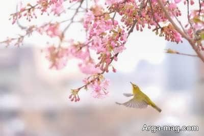 متن جالب در مورد فصل بهار