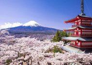 جاذبه ها و مکان های دیدنی توکیو