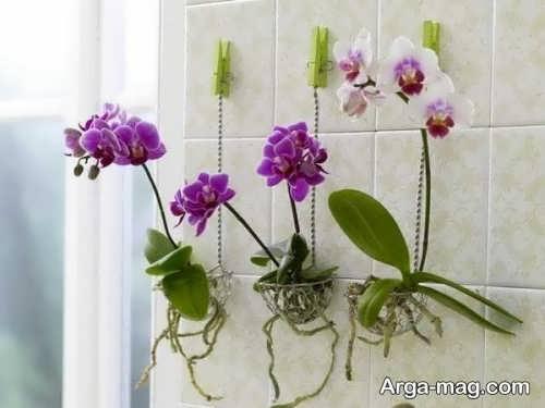 تزیین دیوار با گل طبیعی