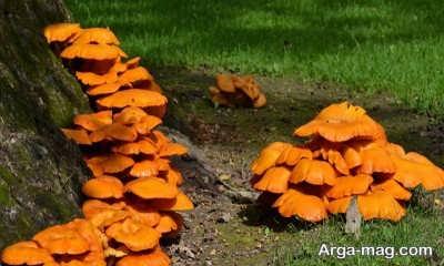 تشخیص انواع قارچ سمی