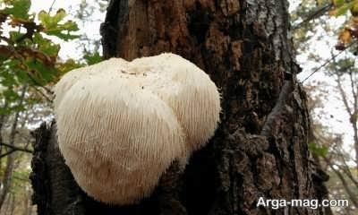 شیوه های تشخیص قارچ های سمی