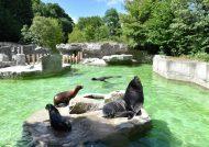دیدنی های باغ وحش استانبول