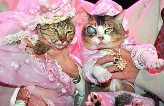رکورد گران ترین ازدواج حیوان های خانگی در تایلند