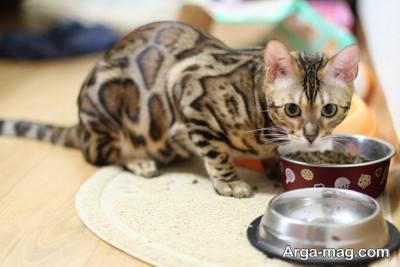 روش تهیه غذای گربه