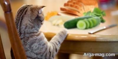 سالاد گربه